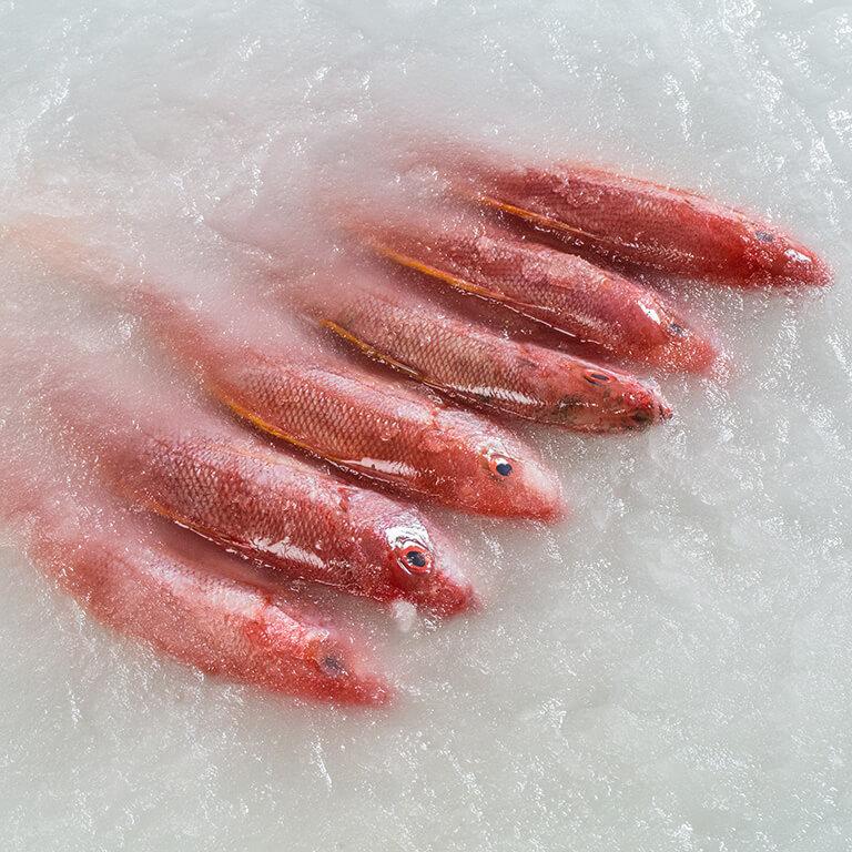 Villfanget fisk